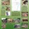 2009 excavations